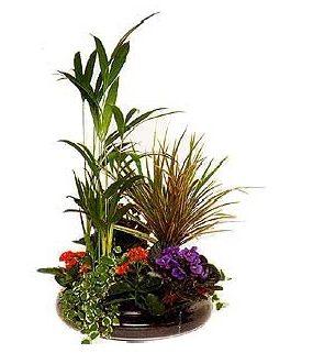 Boina de plantas con base de cristal