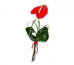Flor de anthurium rojo