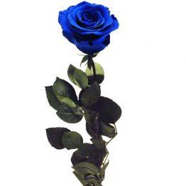 Rosa Azul preservada eterna