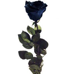 Rosa Negra Preservada Eterna