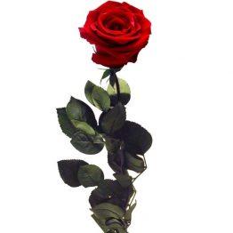 Rosa Roja Preservada Eterna