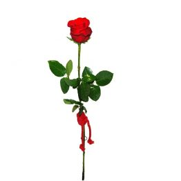 Rosa Roja preparada para regalo