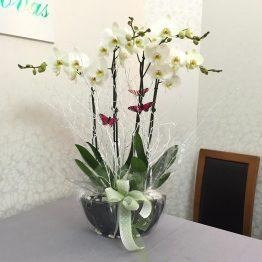 Centro Orquideas blancas