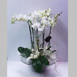 Centro de Orquideas en base cristal
