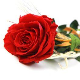 Rosas Rojas a la Carta