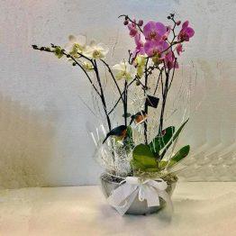 Centro de Orquideas blanco y rosa Vigo